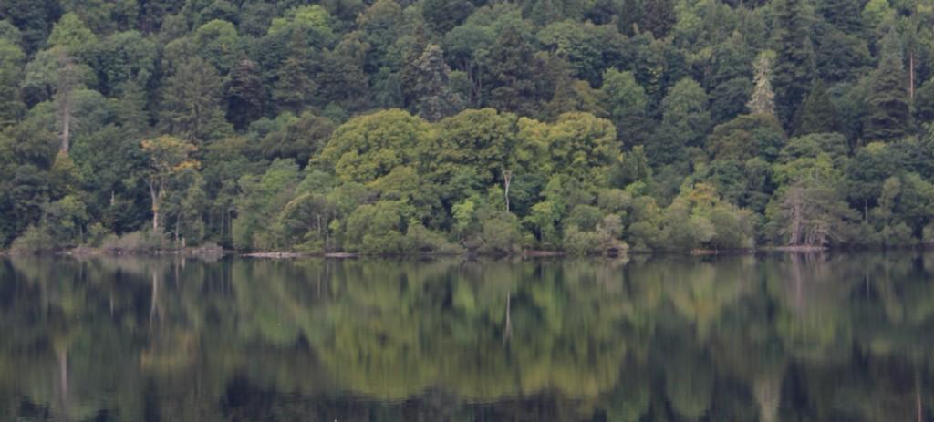 SCWF13 paisaje