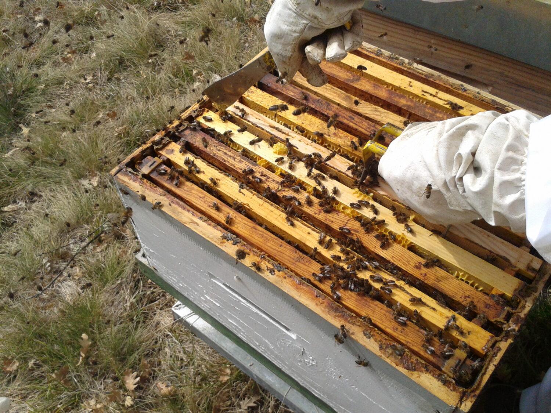 Lanzamos una serie de cursos de formación sobre agroecología, apicultura, micología y otros temas